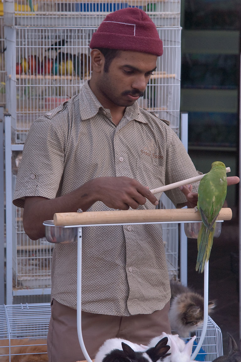Vendor with a green parrot in pet market of Souq Waqif. Doha, Qatar