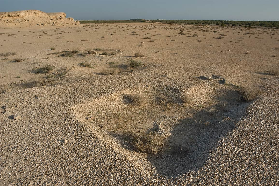 Excavated shell midden on the Kassite dye site in...Jazirat Bin Ghanim). Al Khor, Qatar