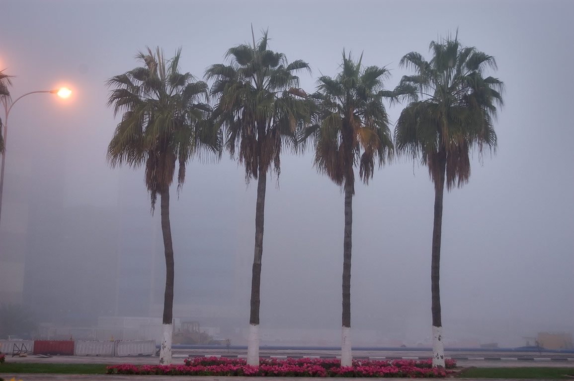 Palms on Diplomatic St. in West Bay in fog. Doha, Qatar