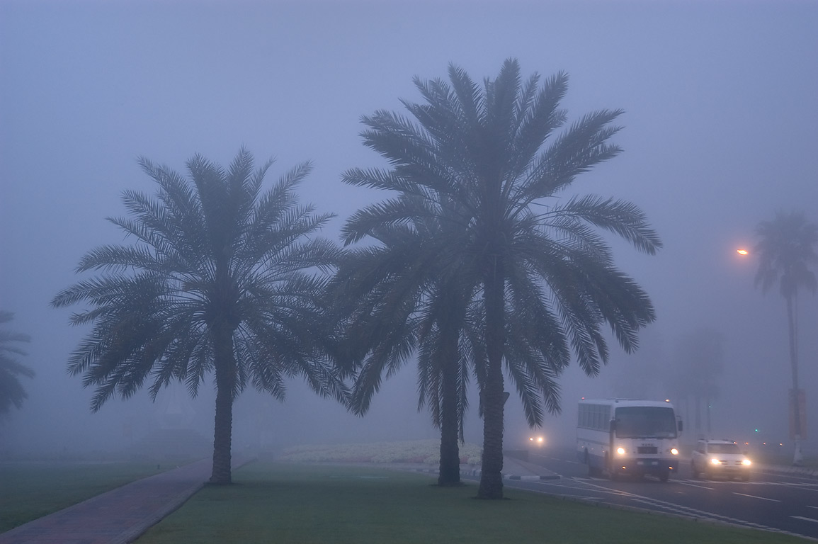 Palms near Sheraton Park on Corniche (waterfront...in West Bay in fog. Doha, Qatar