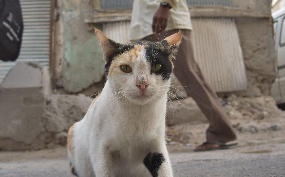 Stray cat sitting in an alley Aws Bin Al Samit...and Al Najada streets. Doha, Qatar