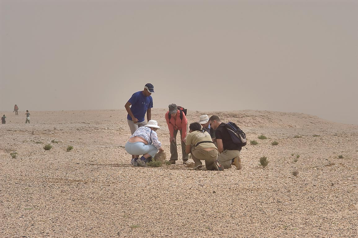 Qatar Natural History Group in desert. Harrarah, 40 miles south-west from Doha. Qatar