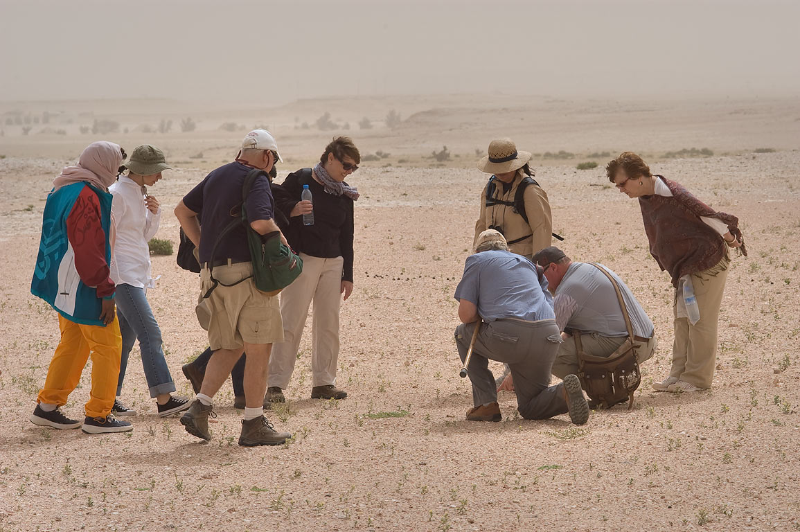 Qatar Natural History Group discovered some small...40 miles south-west from Doha. Qatar