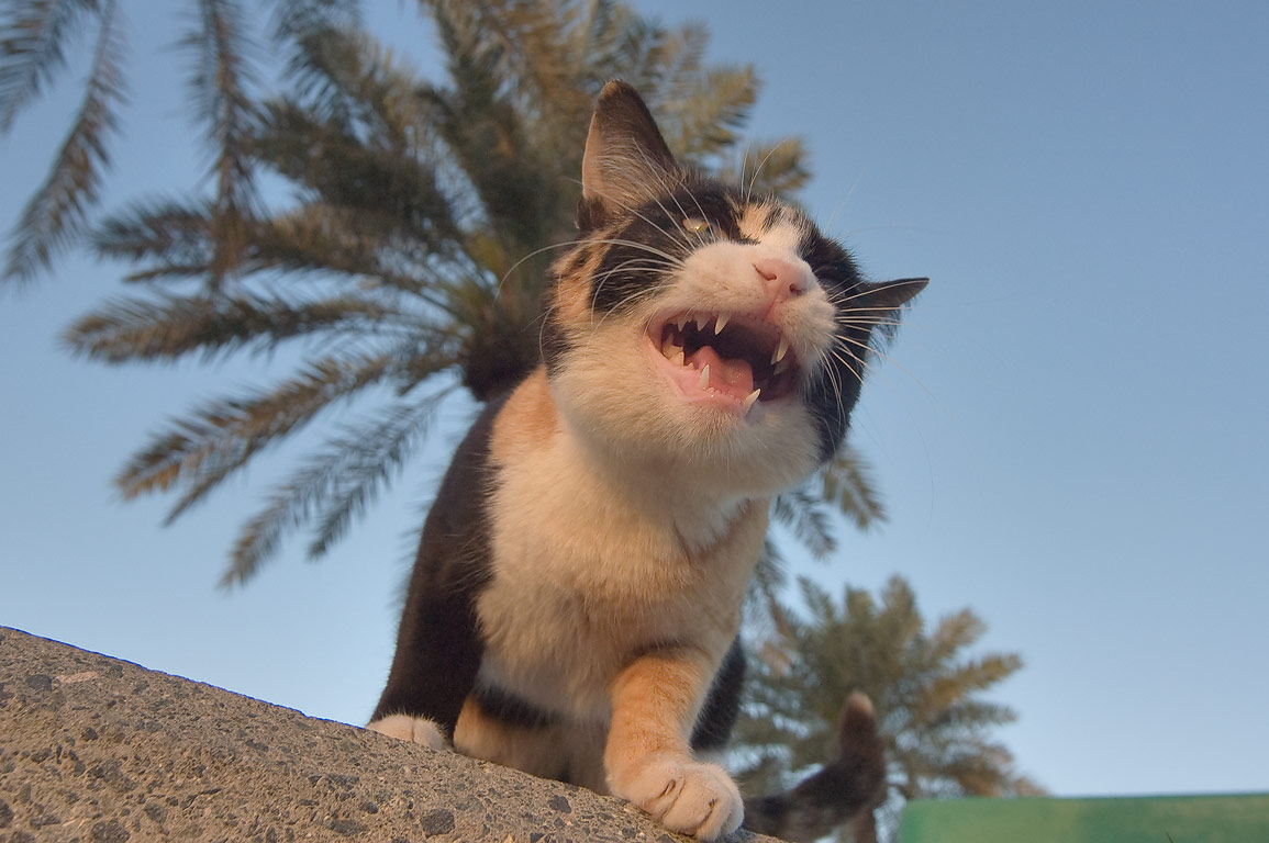 Begging stray kitten on Corniche (seafront promenade) at sunrise. Doha, Qatar