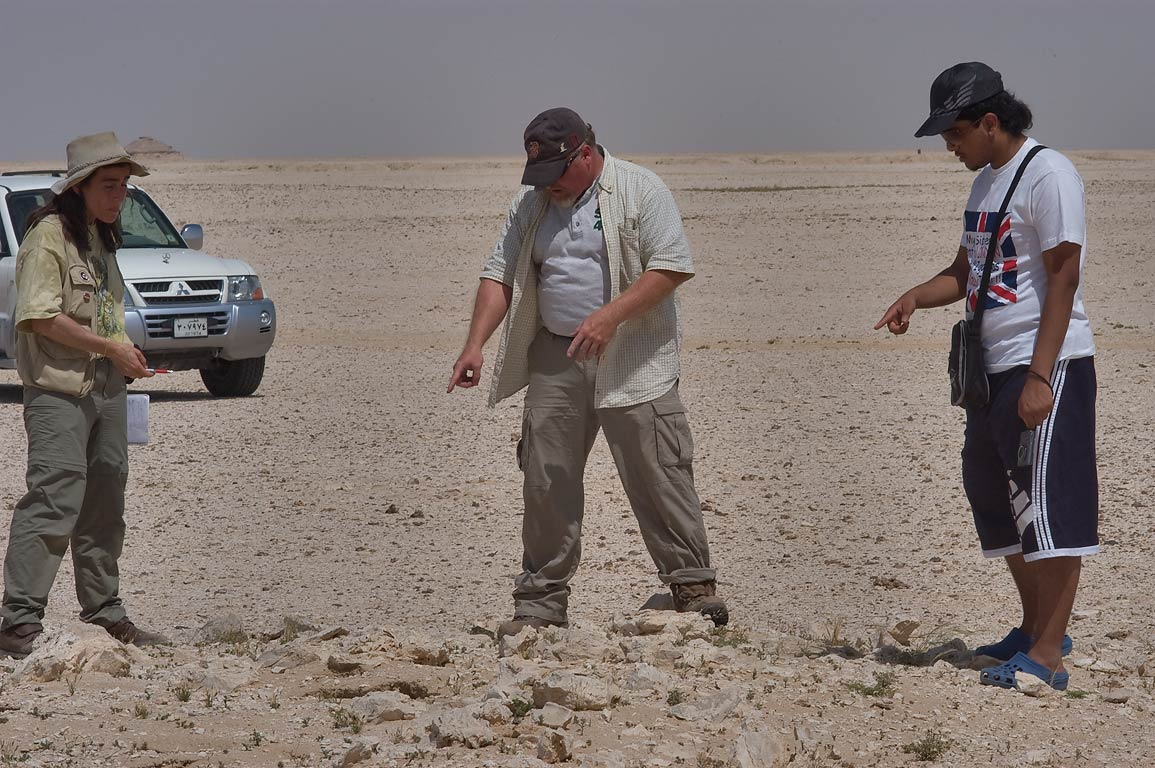 Searching entrance holes of burrows of dhub...40 miles south-west from Doha, Qatar