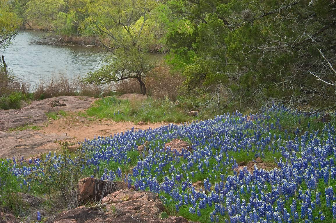 Bluebonnets (lupine) descending along granite...Flats Trail west from Burnet. Texas