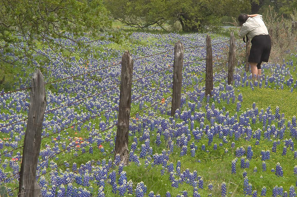 Photographer taking pictures of bluebonnets...near Rd. 29 east from Llano. Texas