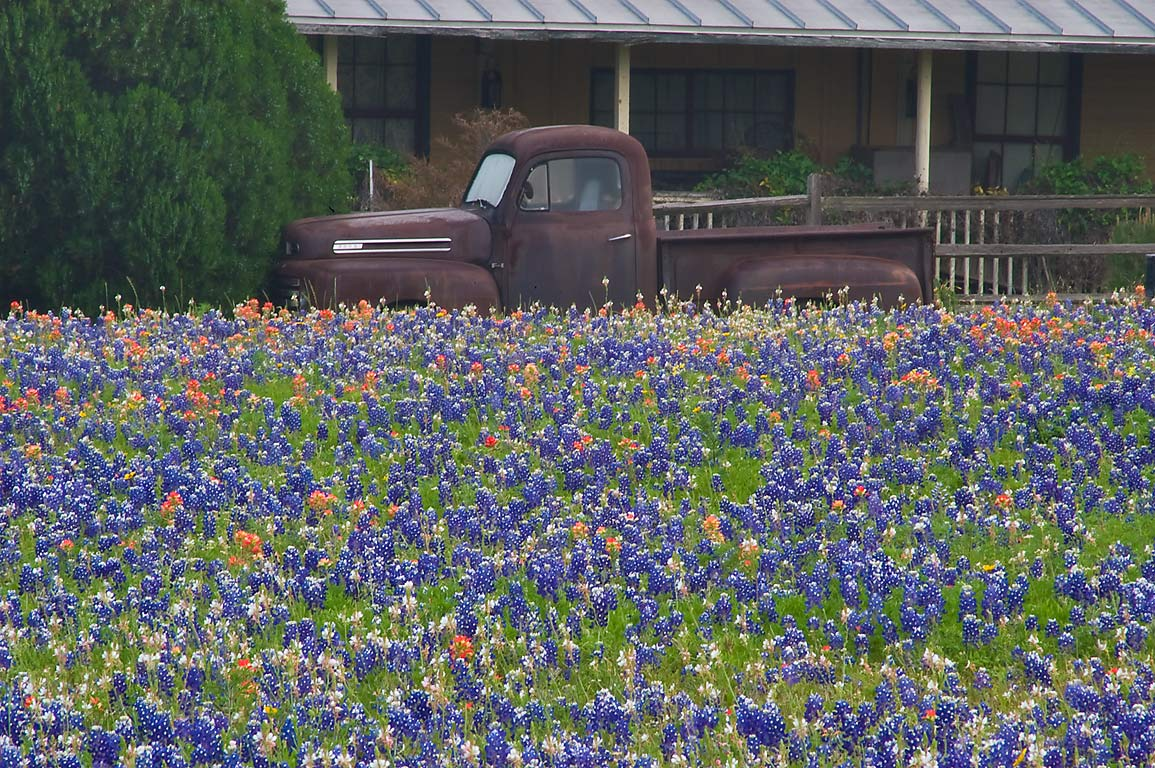 Rusty vintage car in bluebonnets in Old Baylor Park. Independence, Texas