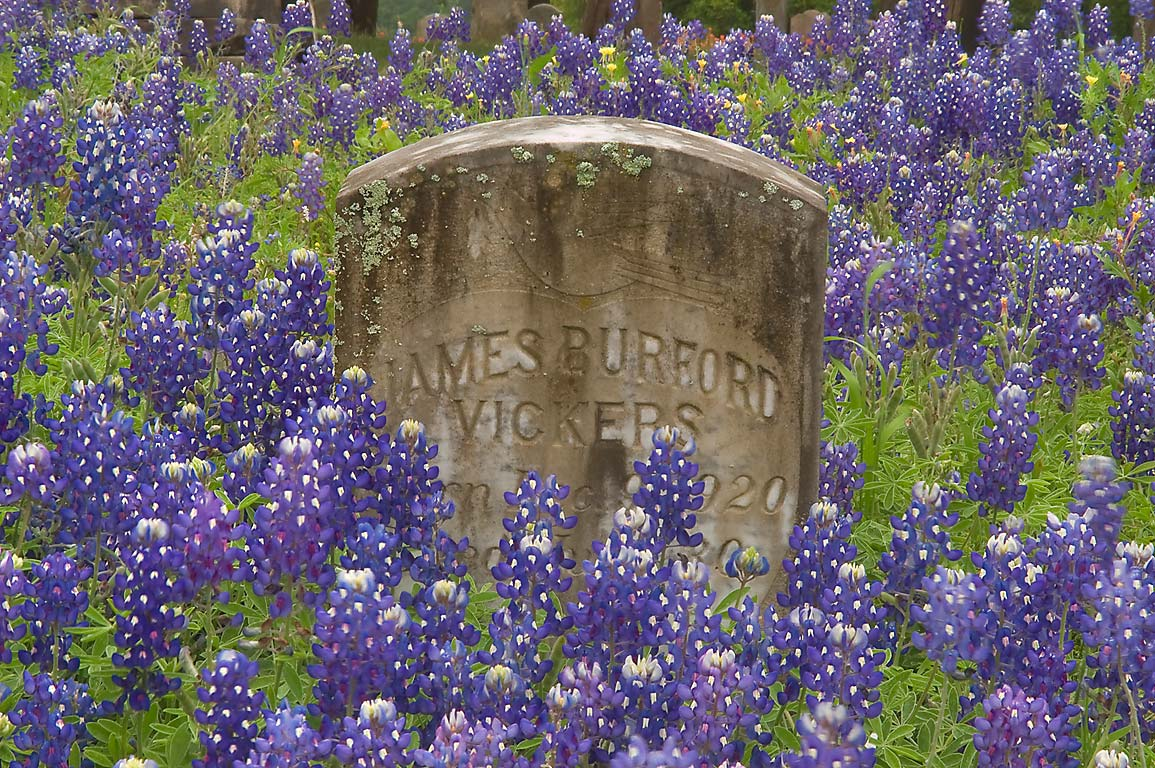 Bluebonnets on a tomb of James Burford Viskers in Independence Cemetery. Texas
