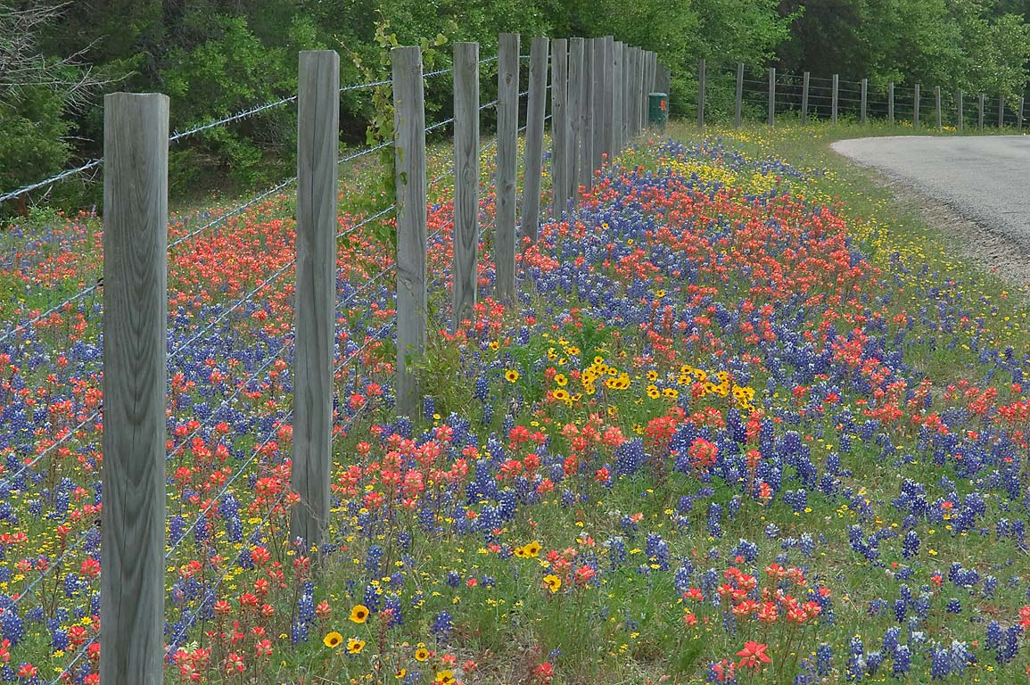 Wildflowers on roadside of Hoddeville School Rd...of Rd. 390 west from Gay Hill. Texas