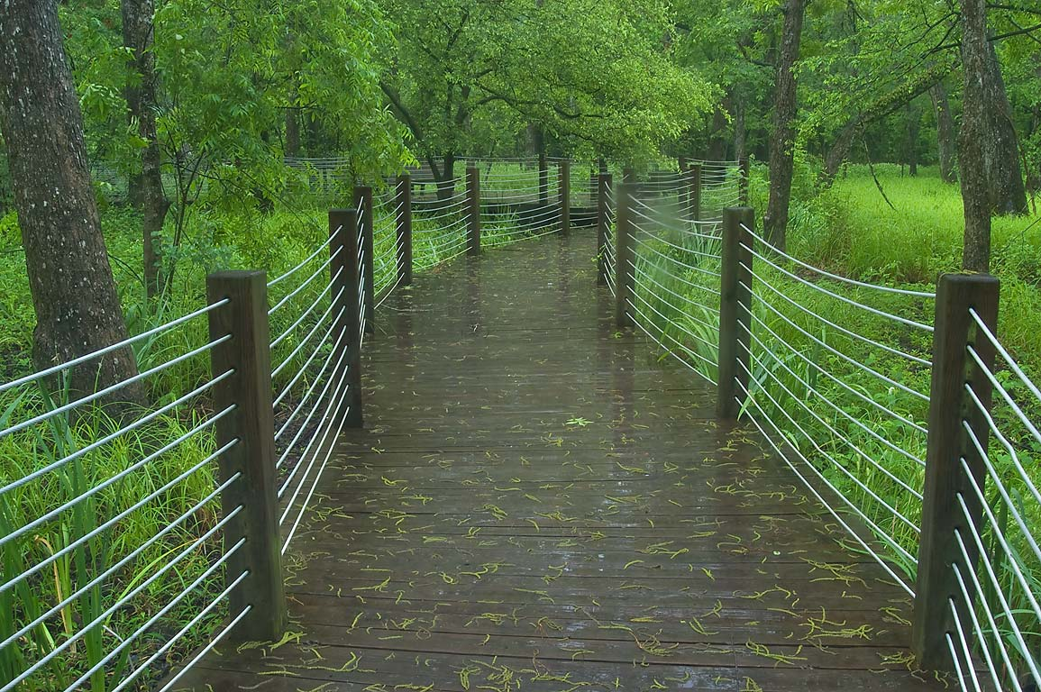 Hickory Bog boardwalk in Mercer Arboretum and...Gardens. Humble (Houston area), Texas