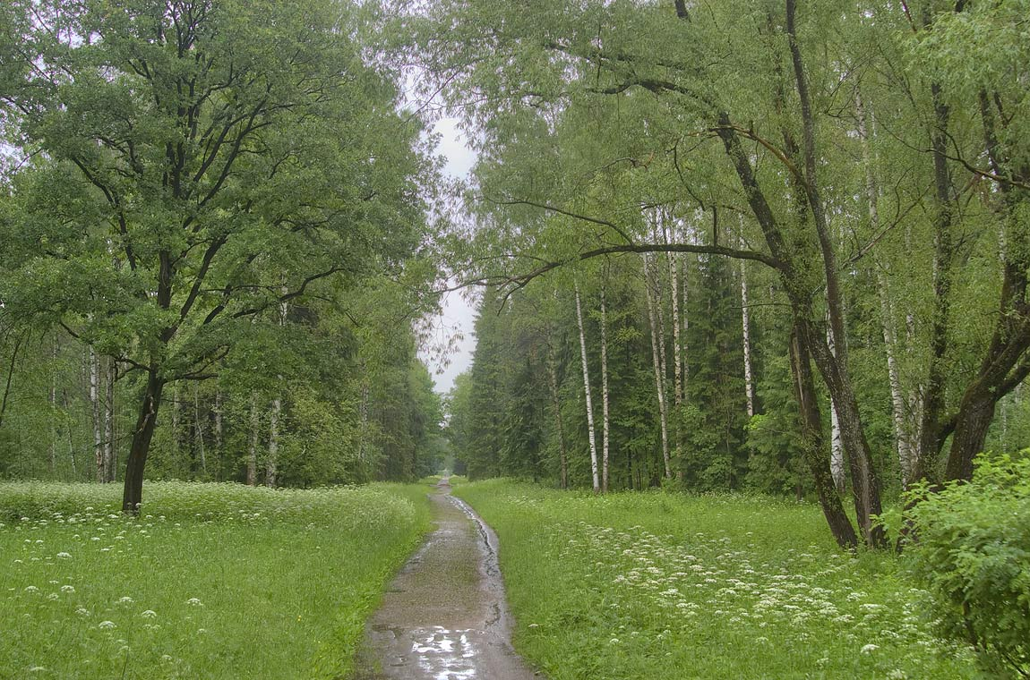 Road in Pavlovsk Park, south from St.Petersburg, Russia