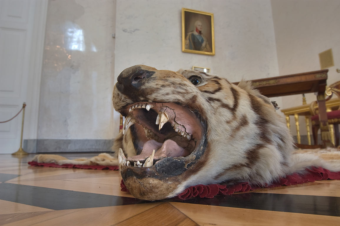 Tiger head in Alexander Palace in Pushkin (former...Selo) south from St.Petersburg, Russia