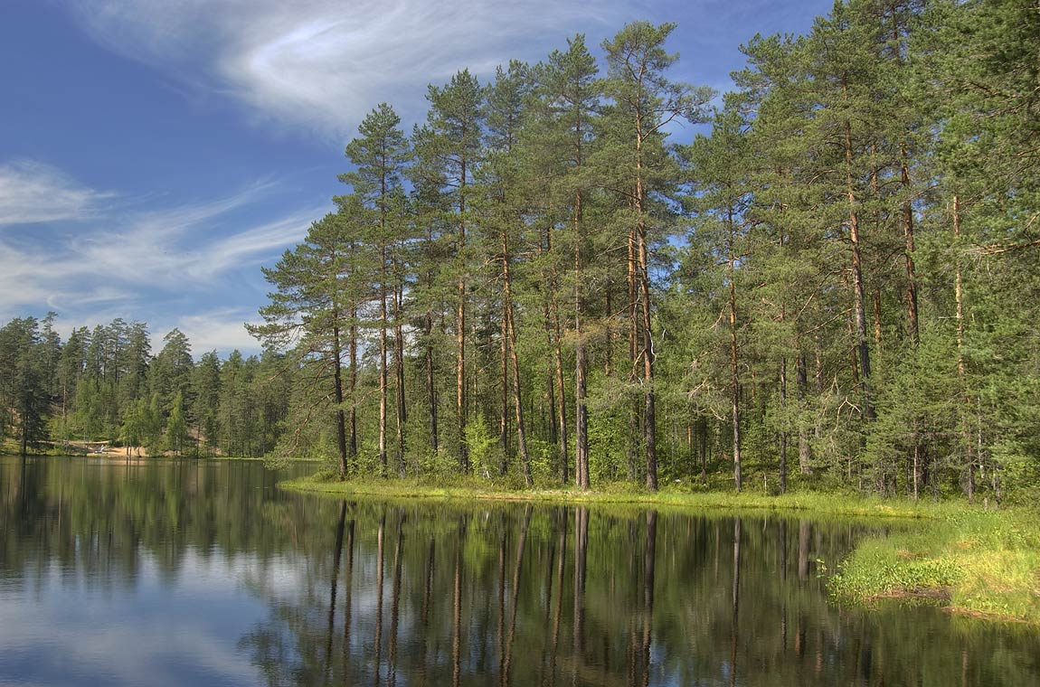 Lake and pine forest near Orekhovo, north from St.Petersburg. Russia