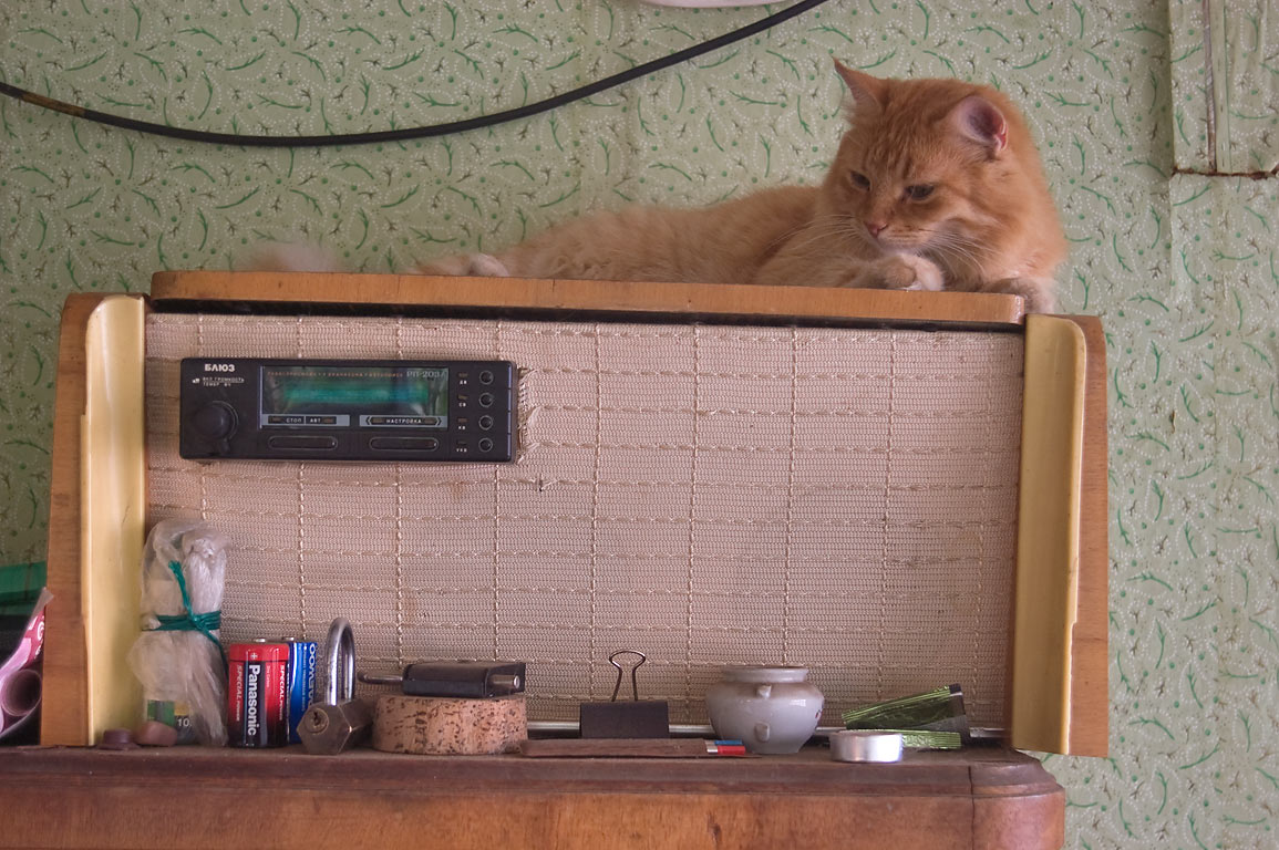 Brown cat on antique radio in a summer house...north from St.Petersburg. Russia