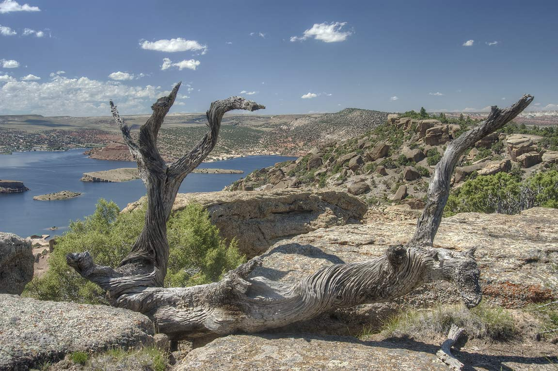 Weathered wood and Alcova Reservoir, view from...miles south-west from Casper. Wyoming