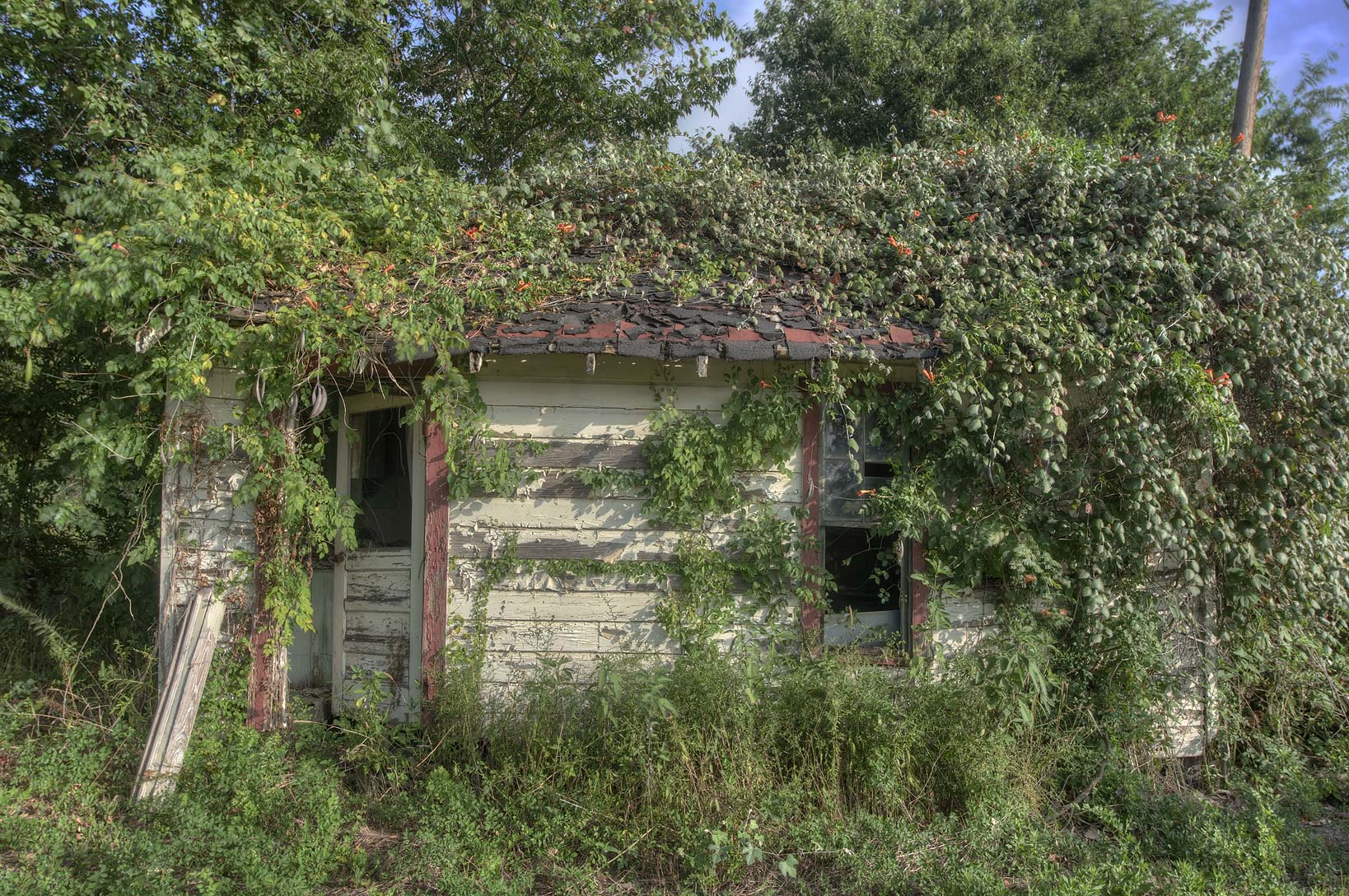 Overgrown house in area of West Barton St.. Calvert, Texas