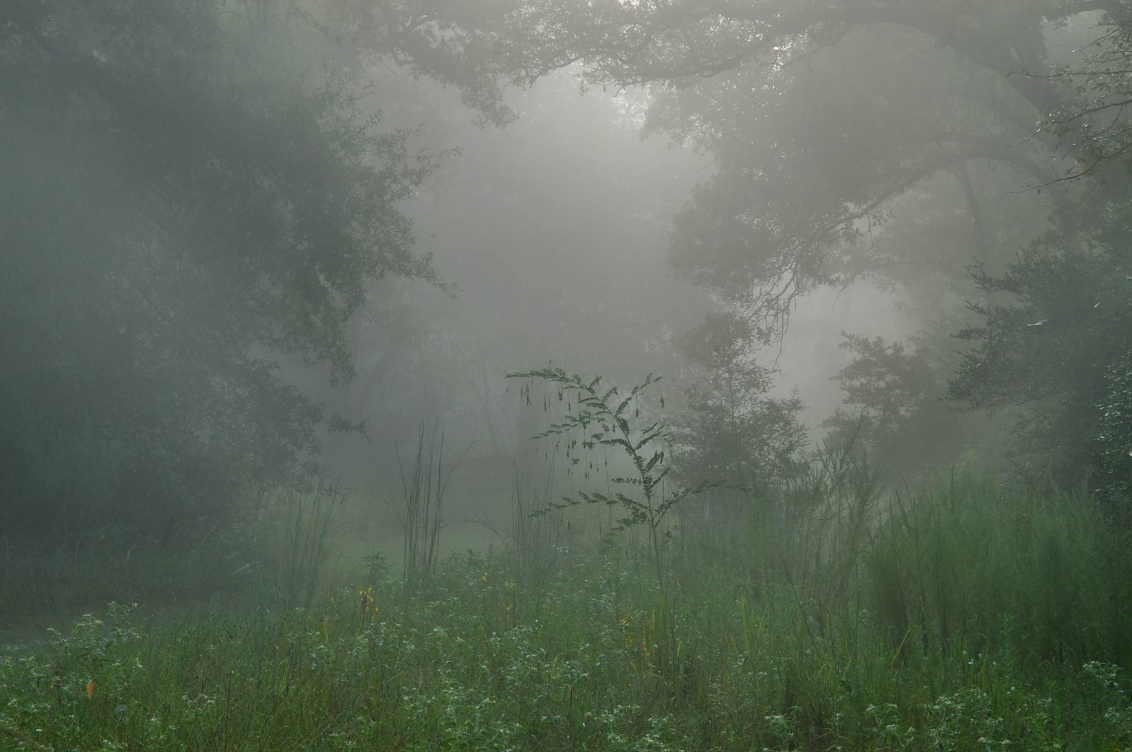 Dense fog on sewage line right of way in Lick Creek Park. College Station, Texas