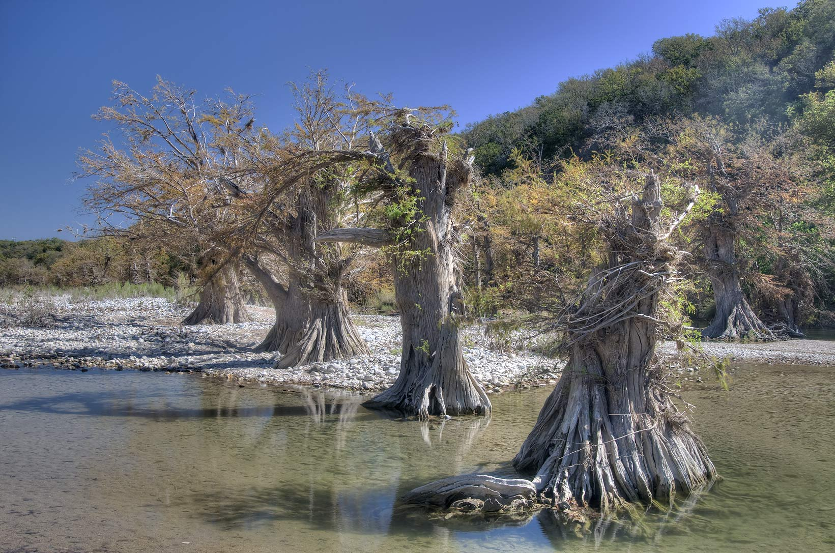 Photo 896-12: Cypresses damaged by flooding in north-east ...