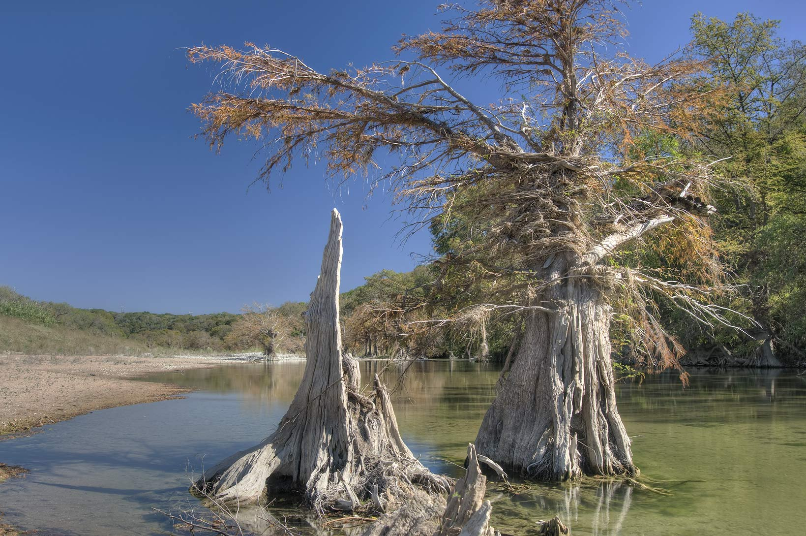 Cypresses and the river in north-east area of...Falls State Park. Johnson City, Texas