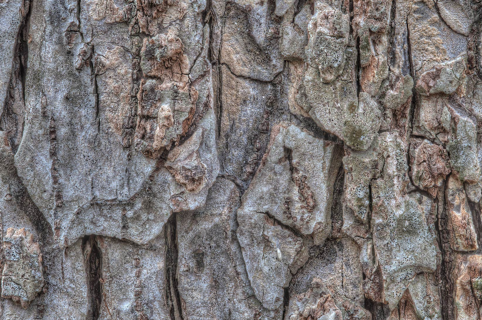 Bark texture near Racoon Run Trail in Lick Creek Park. College Station, Texas
