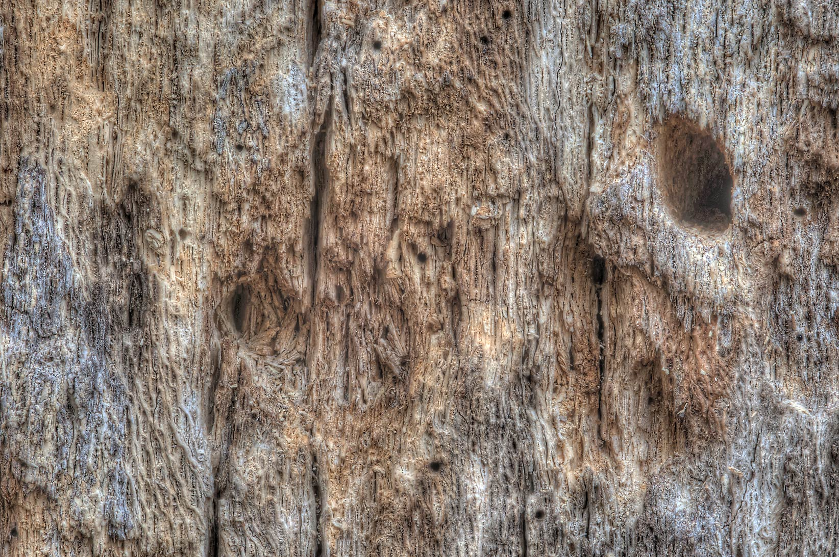 Texture of woodpecker holes on dead tree near...Creek Park. College Station, Texas