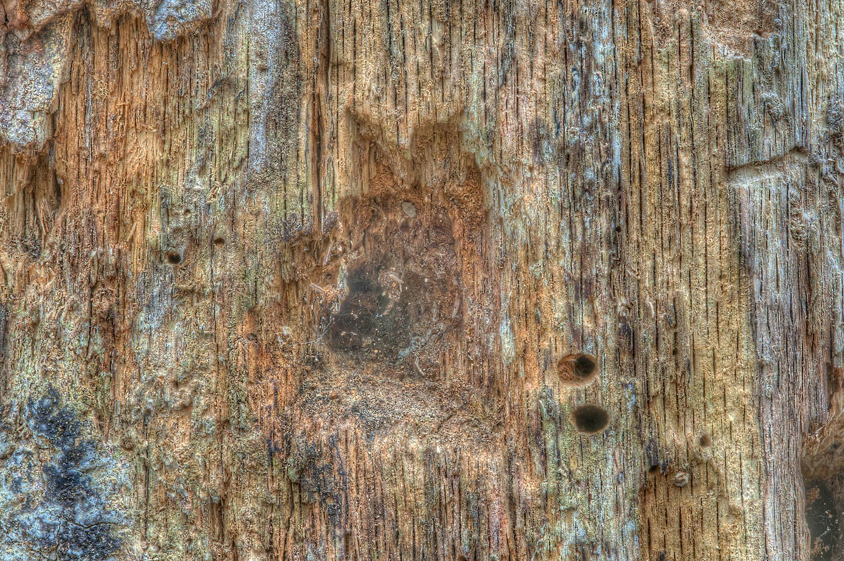 Texture of rotten tree near Racoon Run Trail in Lick Creek Park. College Station, Texas