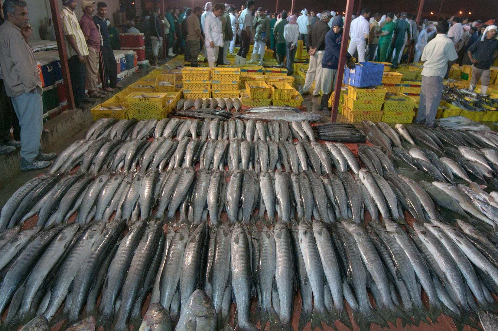 Photo 915 08 mackerel in wholesale central fish market for Central fish market