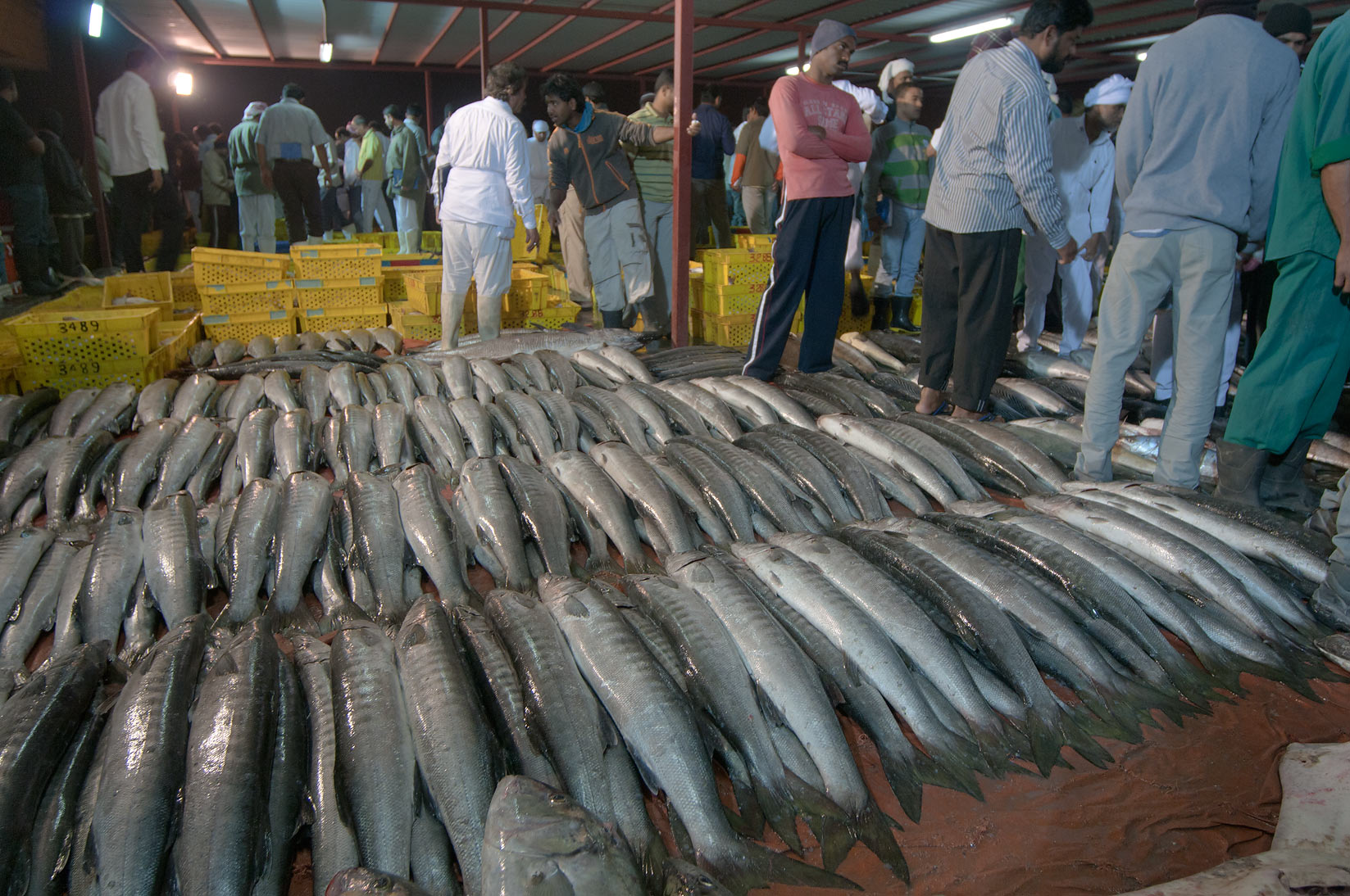 Photo 915 09 seller in wholesale central fish market for Central fish market