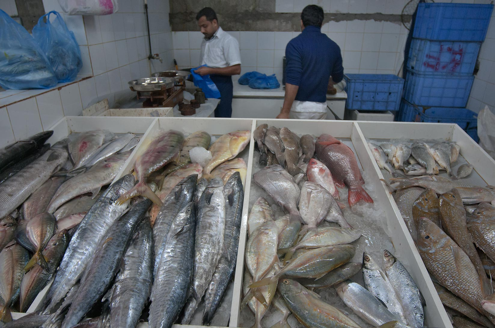 Photo 915 19 large fish in central fish market doha qatar for Central fish market