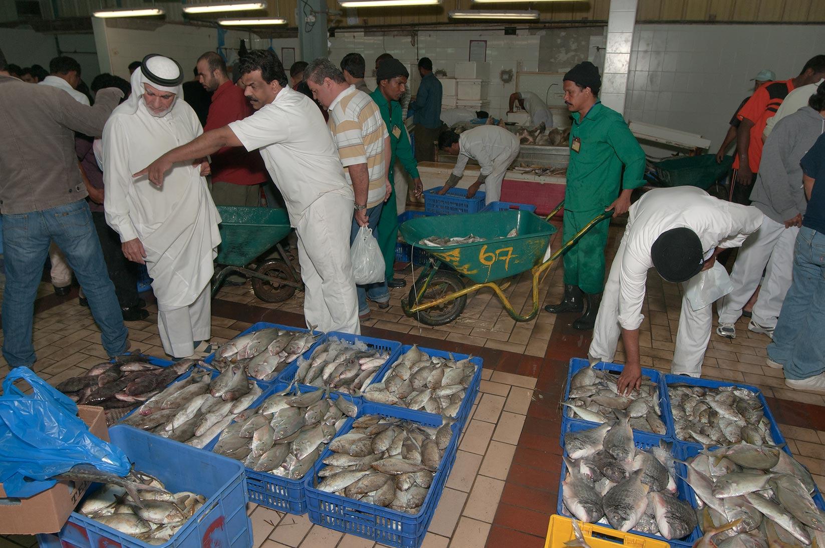 Photo 915 25 barracuda in central fish market doha qatar for Central fish market