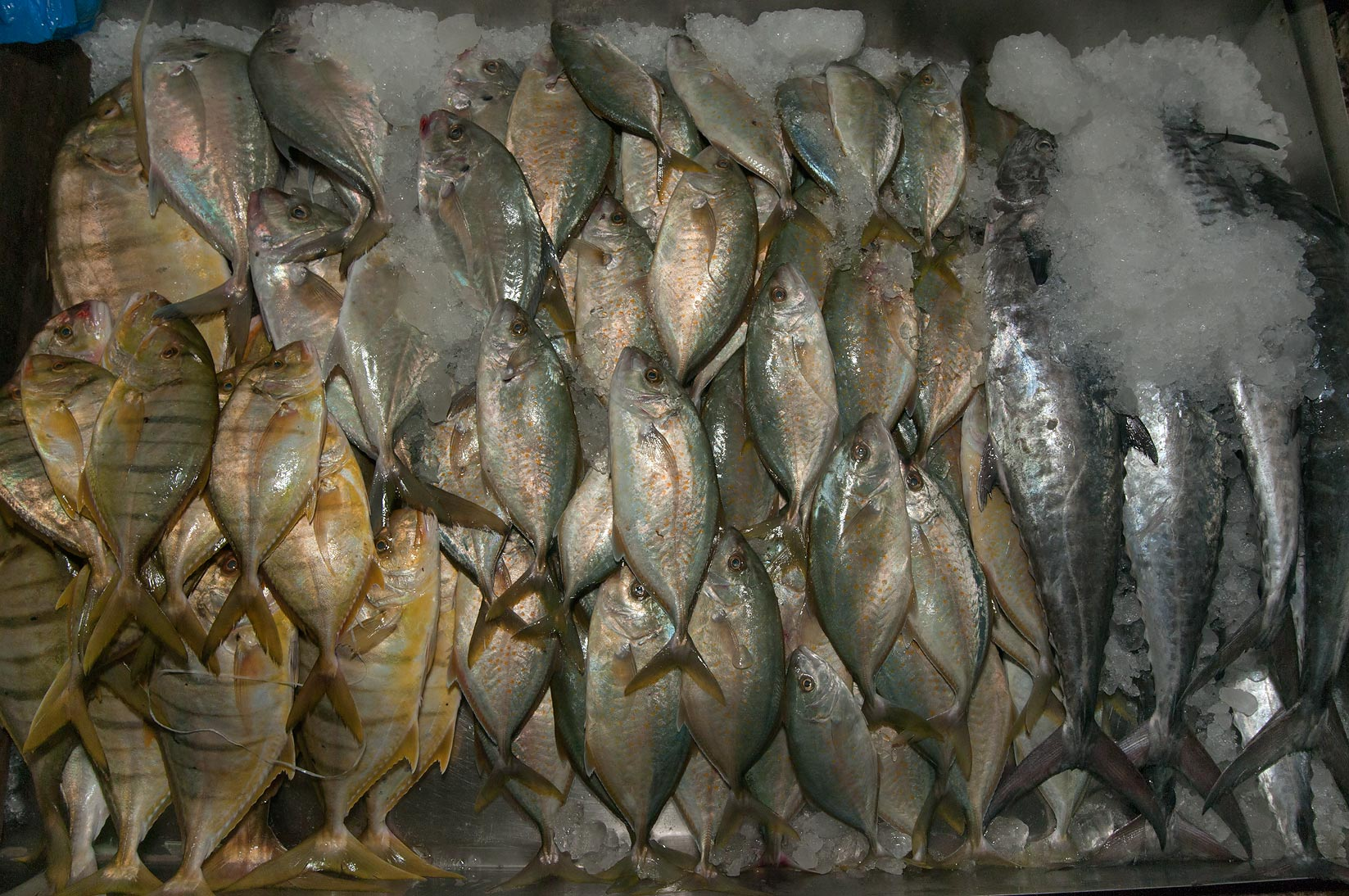 Fish on ice in Central Fish Market. Doha, Qatar