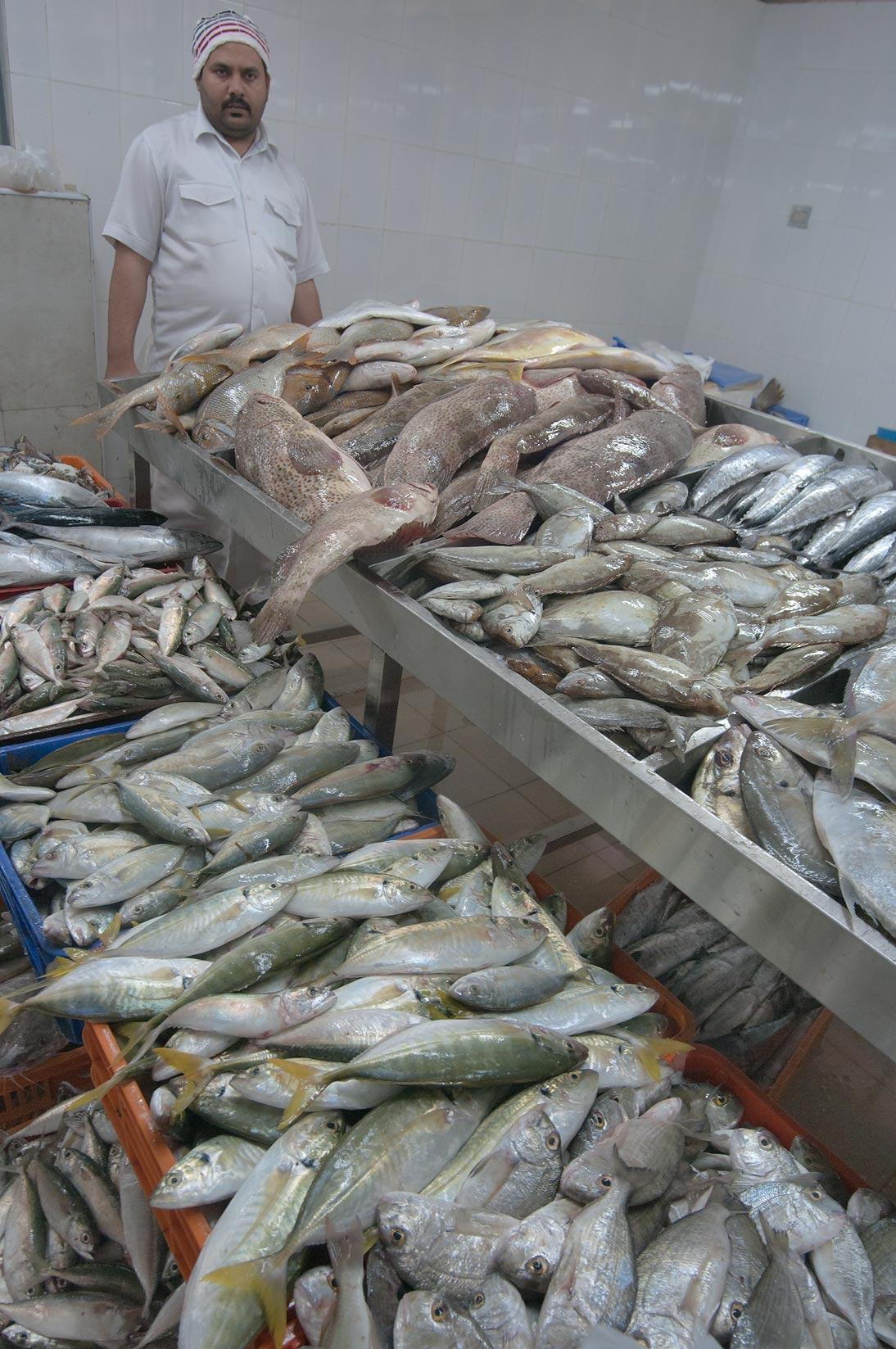 Slideshow 916 14 stalls in central fish market doha qatar for Central fish market