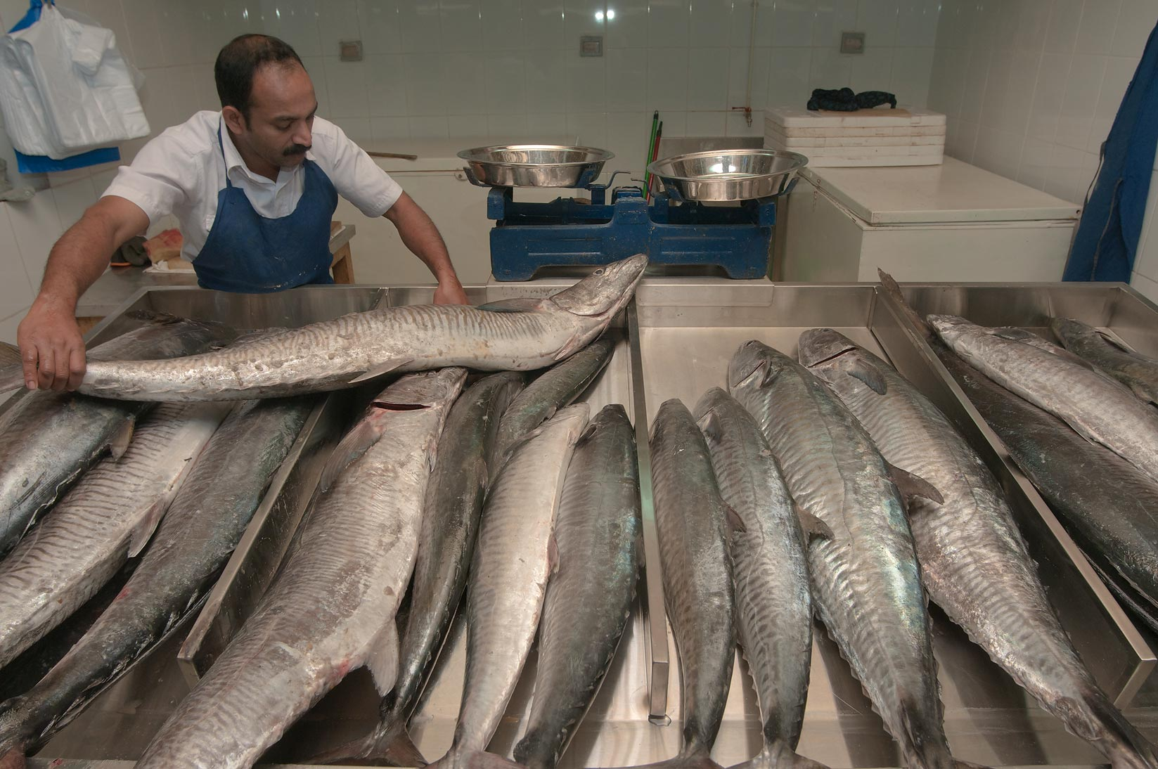 Seller moving King Fish (mackerel) to a stall in Central Fish Market. Doha, Qatar