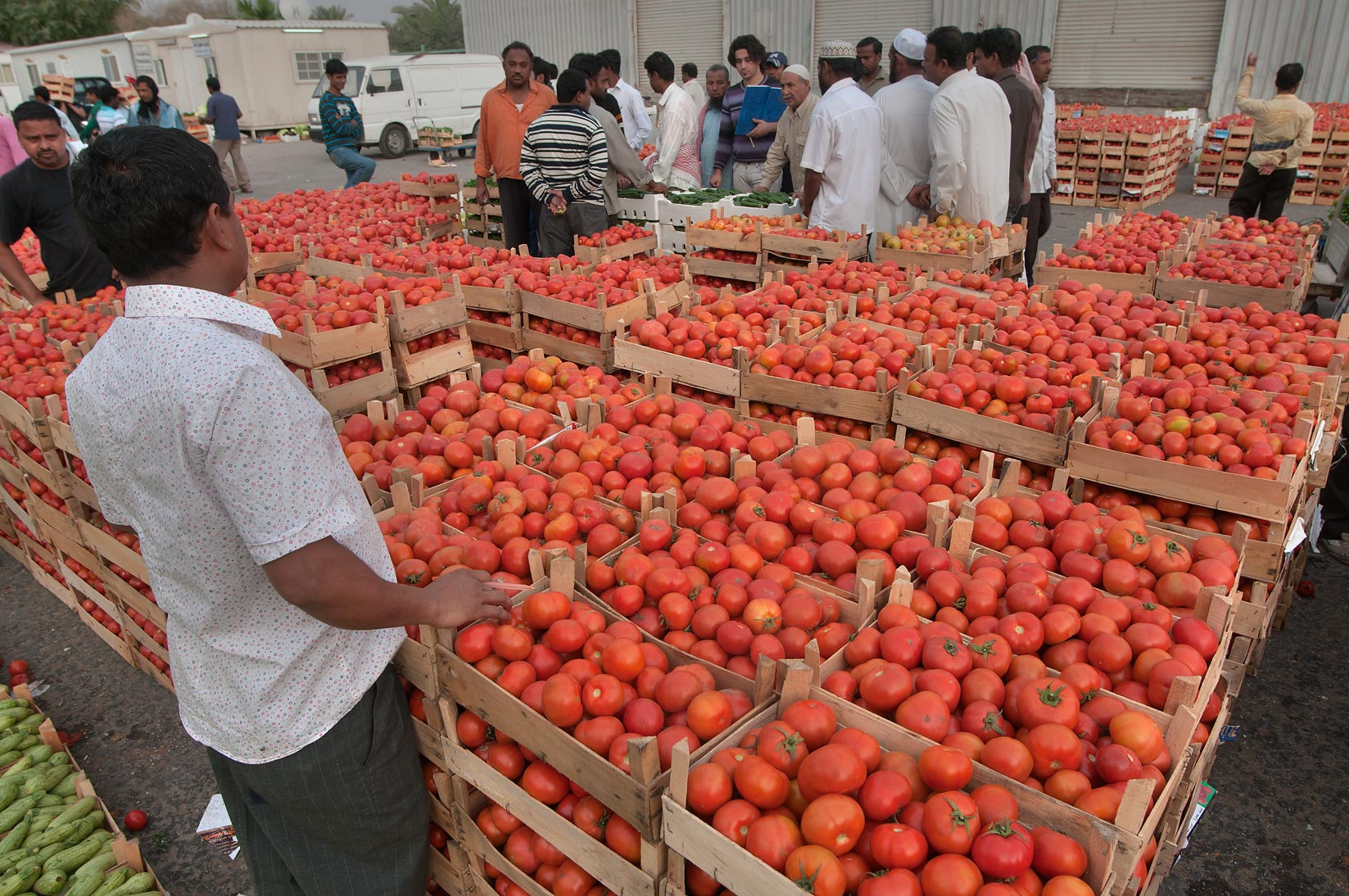 Shoppers near boxes with tomato in Wholesale Vegetable Market. Doha, Qatar