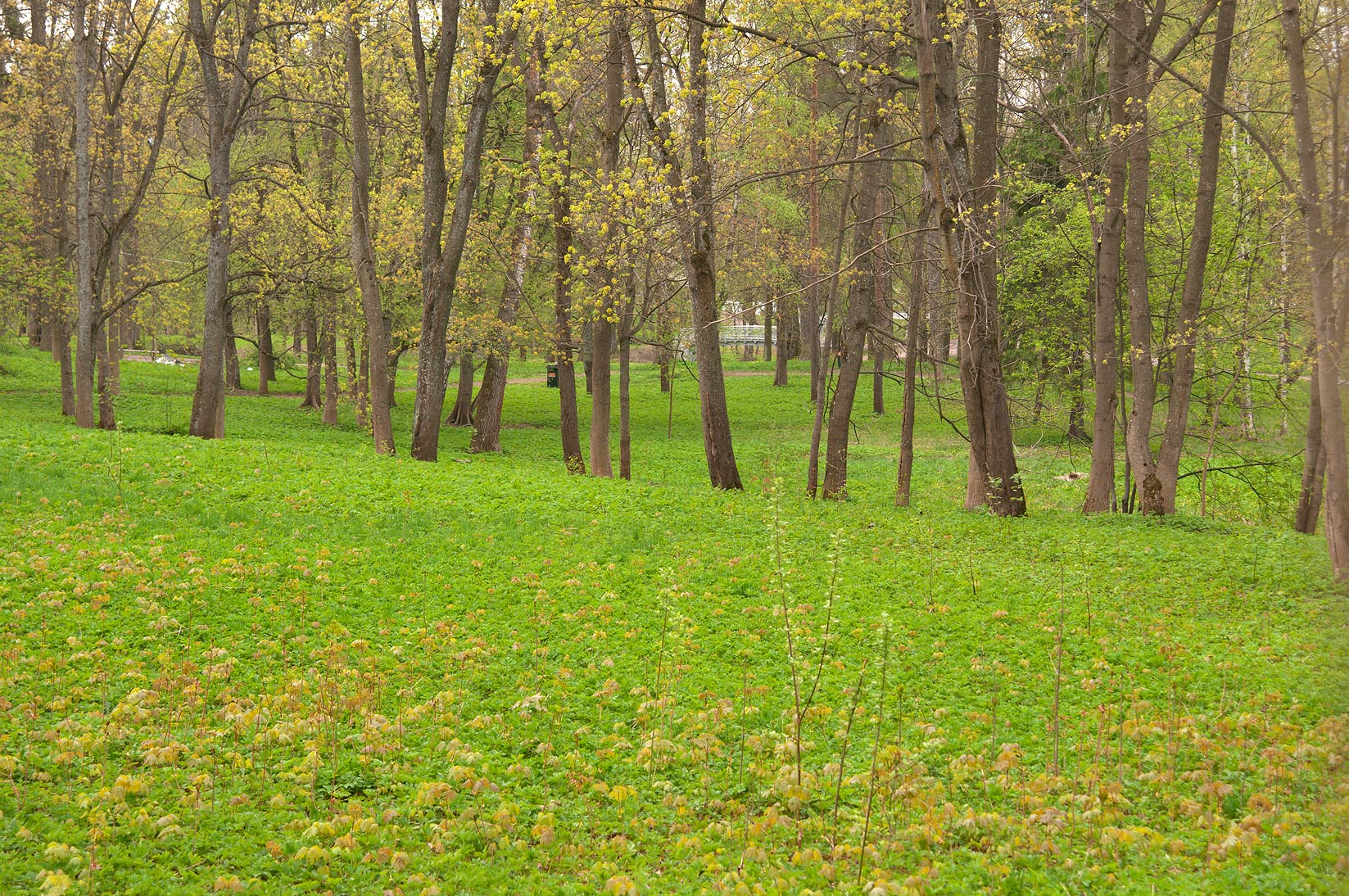 Greenery in Gatchina Park, suburb of St.Petersburg. Russia