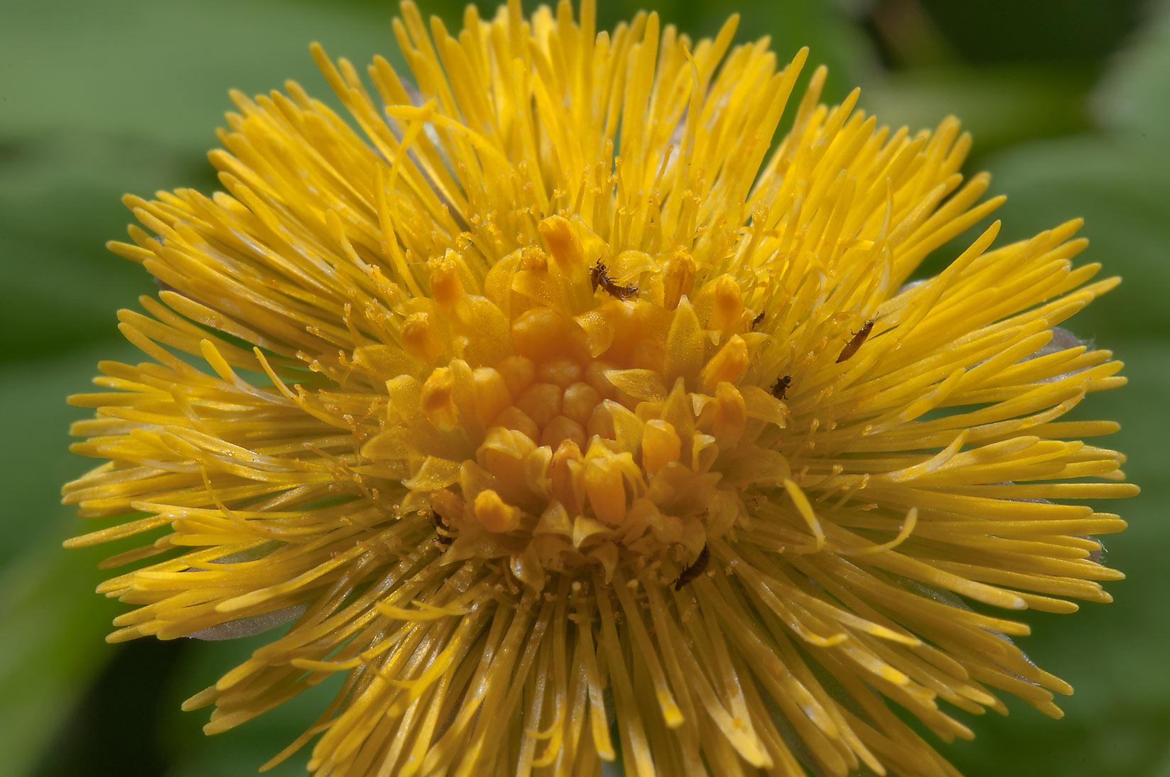 Names Of Yellow Spring Flowers Comousar