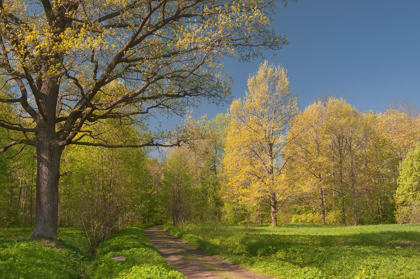 Road in a park of Lomonosov (Oranienbaum). West from St.Petersburg, Russia