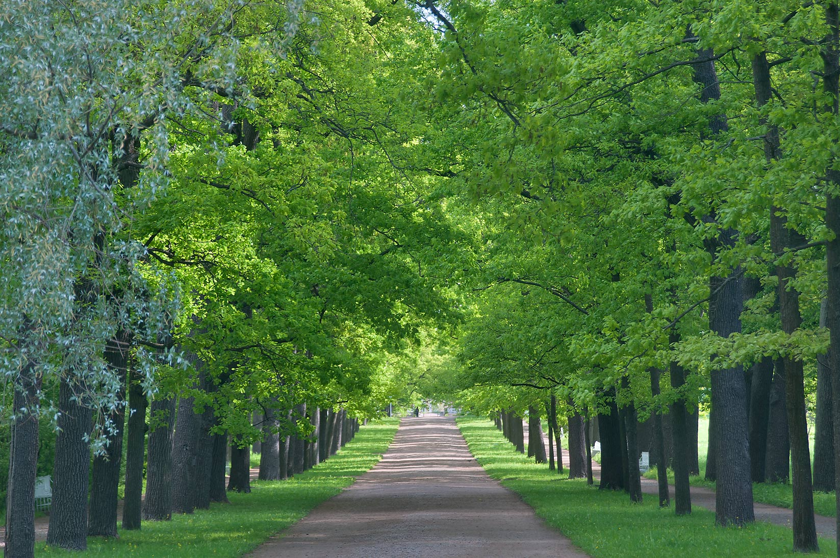 Wide linden alley in Ekaterininsky Park. Pushkin...south from St.Petersburg, Russia
