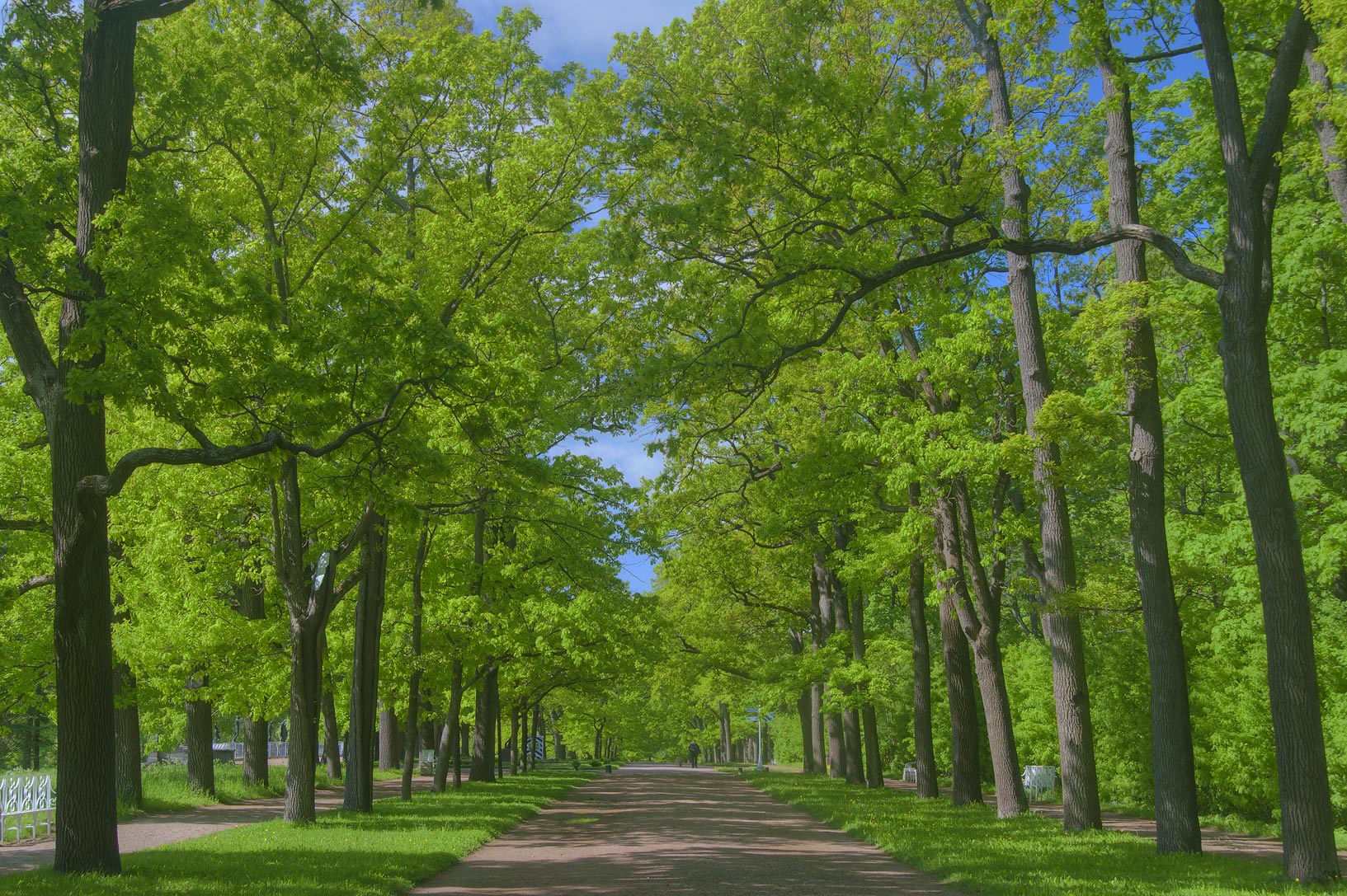 Alley in Ekaterininsky Park. Pushkin (former...south from St.Petersburg, Russia