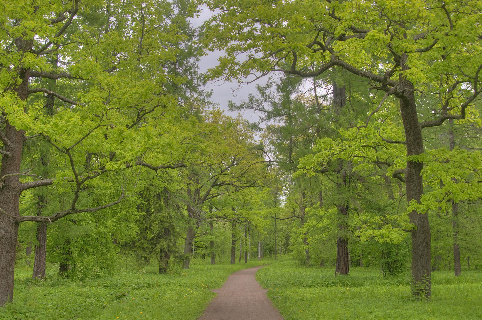 Oak alley in Aleksandrovsky Park. Pushkin (former...south from St.Petersburg, Russia