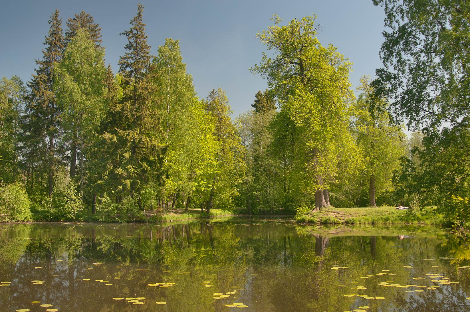 Islands of Napoleon Hat Pond in Shuvalovo Park. St.Petersburg, Russia