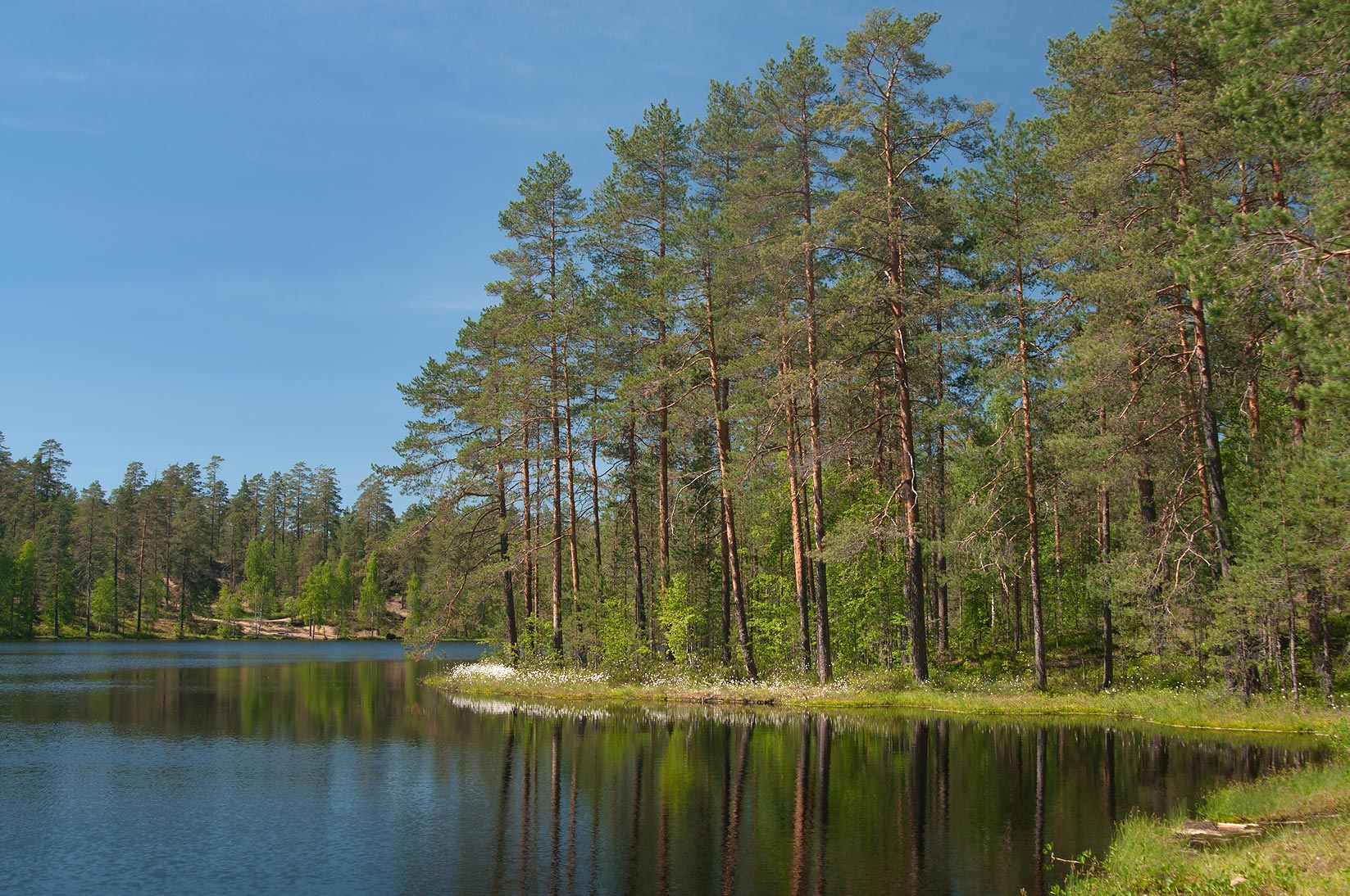 Verkholino (Figurnoe, Likolampi) Lake in pine...miles north from St.Petersburg. Russia