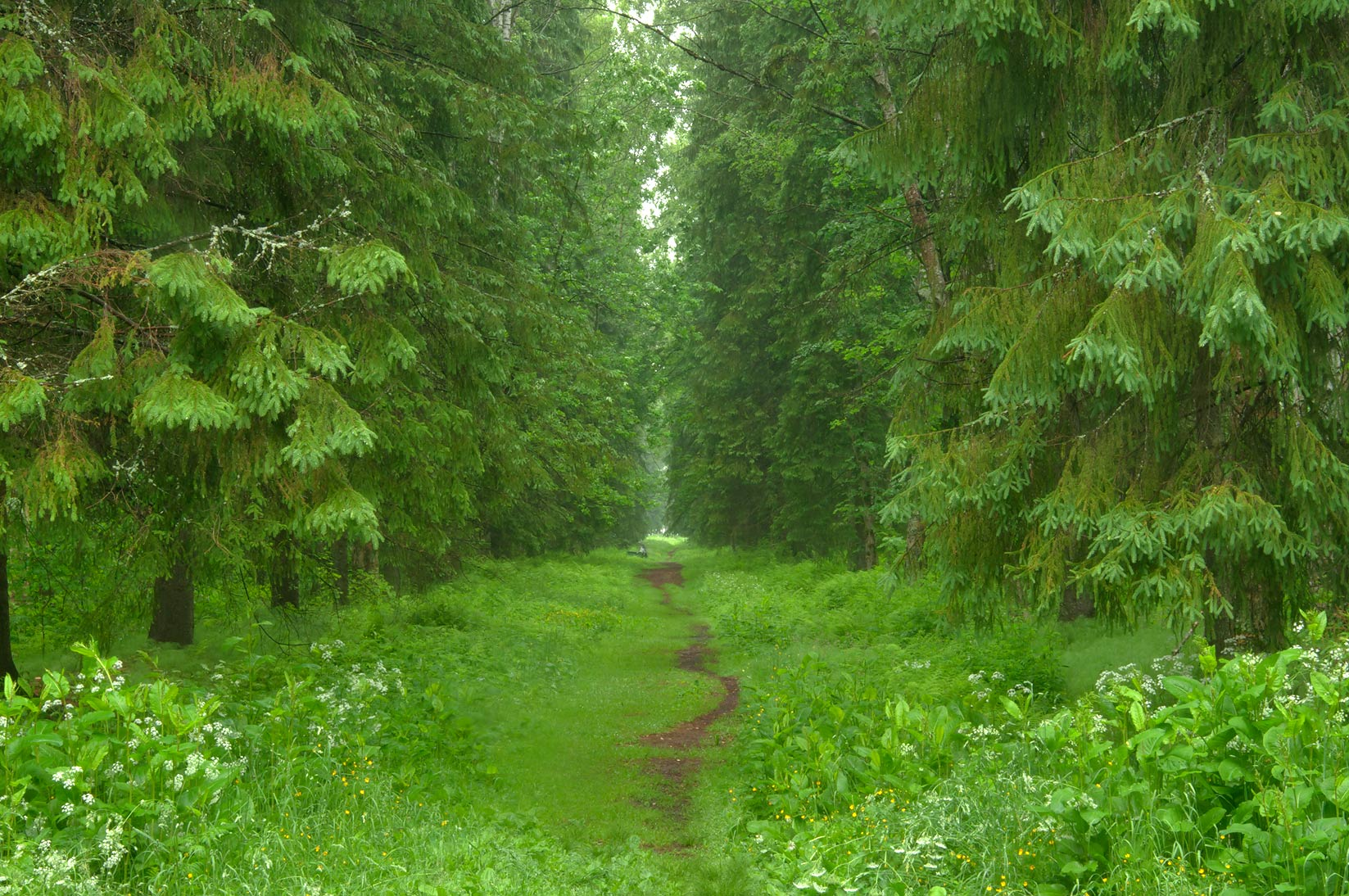 Fir alley near train station in Pavlovsk Park, suburb of St.Petersburg. Russia