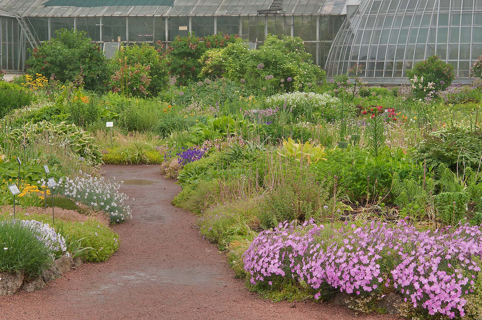 Photo 966 06 Flowers And Greenhouses In Botanic Gardens Of Institute St Petersburg Russia