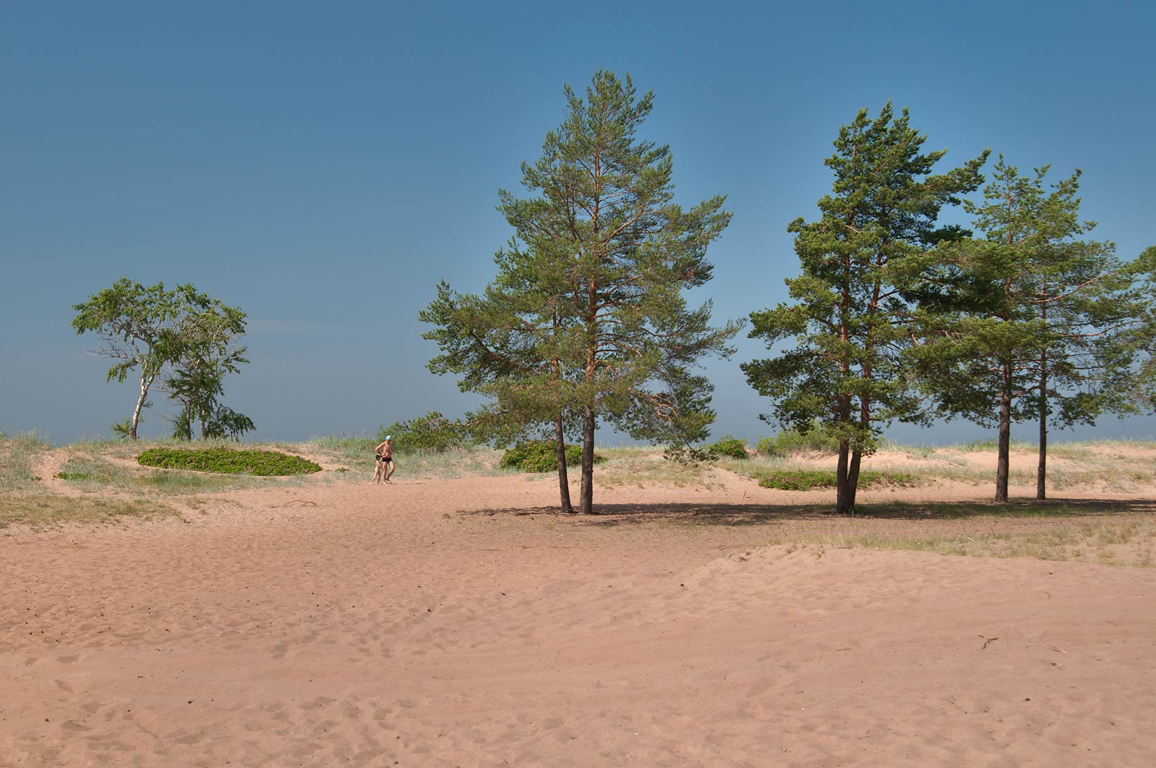 Dunes in Solnechnoe, west from St.Petersburg. Russia