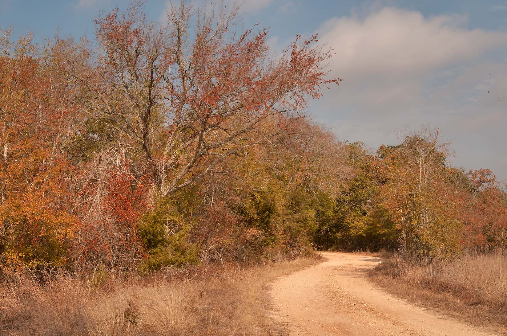 Road in Birch Creek Park near Somerville Lake. Texas