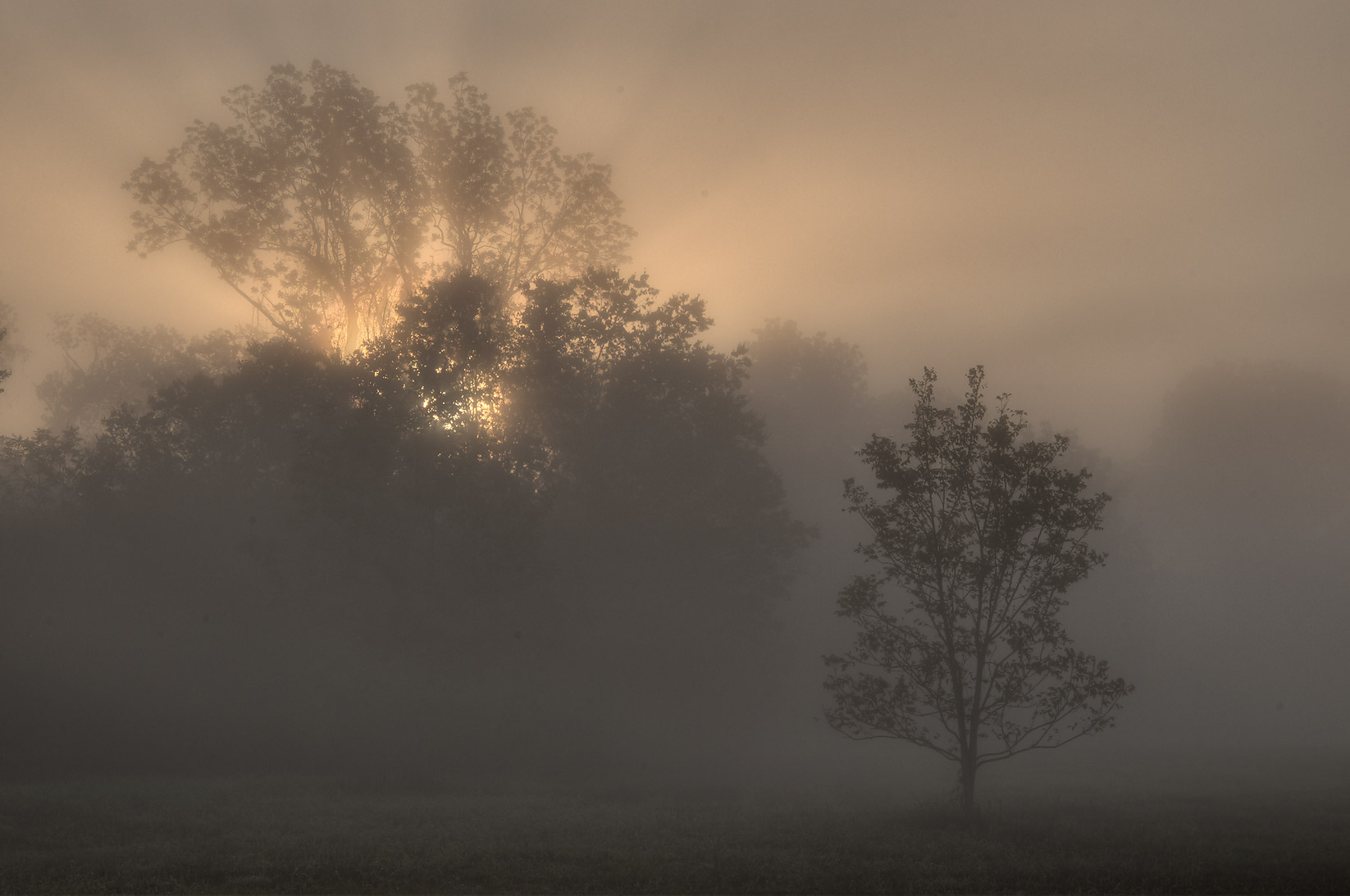 Foggy sunrise on Loop Trail in Washington-on-the...State Historic Site. Washington, Texas