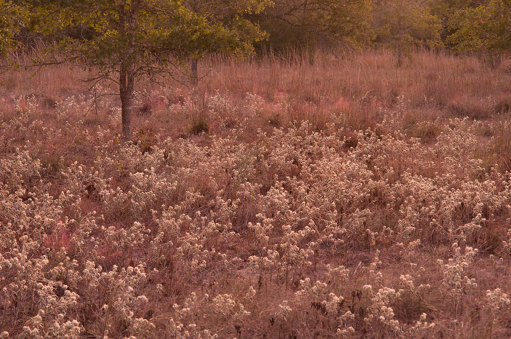 Dry prairie in Lick Creek Park. College Station, Texas