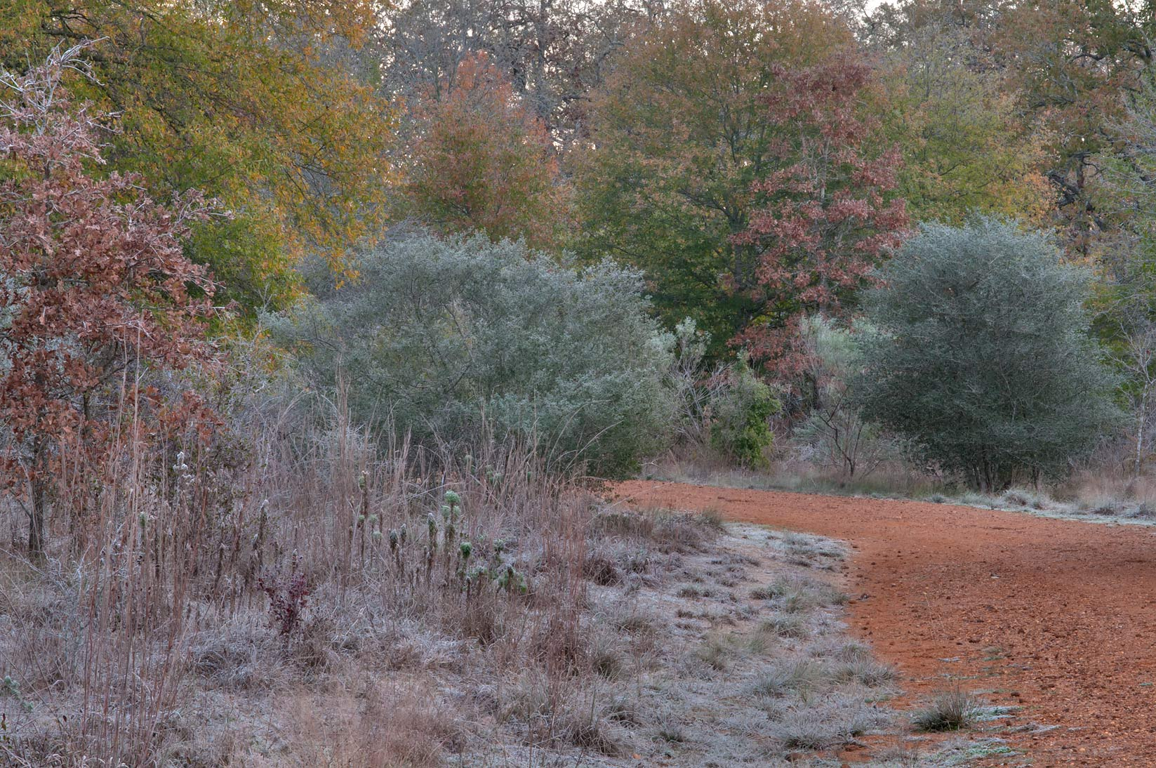 Morning freeze in Lick Creek Park. College Station, Texas